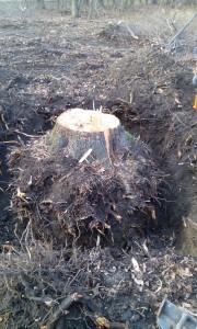 Odstranění pařezu z pozemku